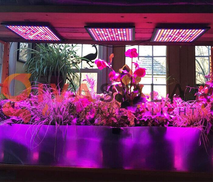 Mua đèn LED quang hợp cho cây trồng ở đâu 1