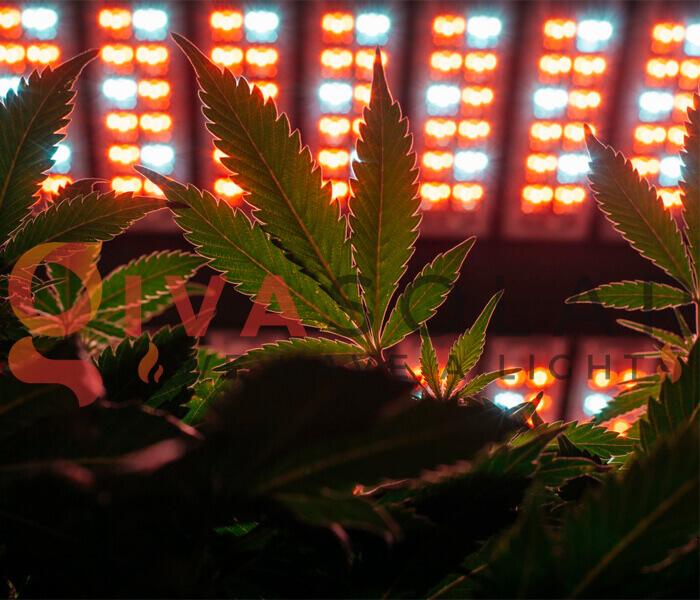 Mua đèn LED quang hợp cho cây trồng ở đâu 2